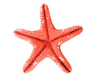 Starfish on white background Stock Photos