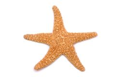 Starfish on a white background. The starfish on a white background Stock Photography