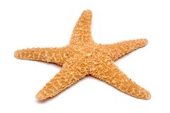 Starfish on a white background Royalty Free Stock Photo