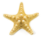 Starfish  on a white background Royalty Free Stock Image