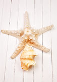 Starfish on a white background wooden table. Starfish on a background wooden table Stock Image