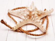 Starfish on a white background wooden table. Starfish on a background wooden table Stock Photography