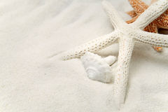Starfish On White Sand Stock Photo