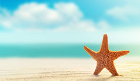 Starfish on white sand beach with ocean stock photography