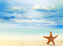 Starfish on white sand beach with ocean stock images