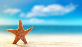 Starfish on white sand beach with ocean stock photos