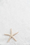 Starfish on the white sand - copy space Stock Photos