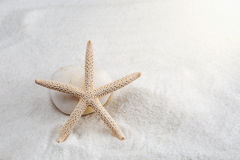 Starfish on the white sand - copy space Royalty Free Stock Photography