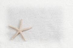 Starfish on the white sand - copy space Royalty Free Stock Photos