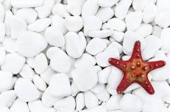 Starfish on the white stones. stock photos