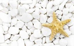 Starfish on the white stones. Stock Photo