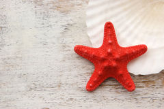 Starfish with wood background and shell. Red starfish on white wood background and seashell Royalty Free Stock Photo