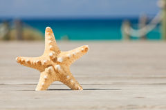Starfish on a wooden path. Royalty Free Stock Photos