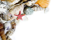 Starfishand seashells. Starfish and seashells on white with a lot of copy space Royalty Free Stock Photos