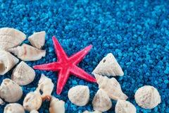 Starfishe и seashells на голубом песке Стоковое Фото