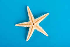 Starfishe Στοκ φωτογραφία με δικαίωμα ελεύθερης χρήσης