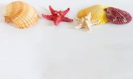 Starfishells avec des coquillages sur le fond blanc Image libre de droits