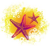 starfishes чертежа Стоковая Фотография