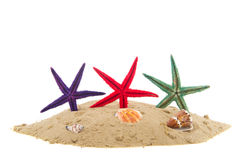 Starfishes Stock Photos