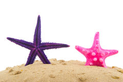 Starfishes Royalty Free Stock Photo
