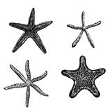 Starfishes Royalty Free Stock Photography