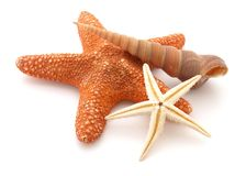 Starfishes Stock Photography