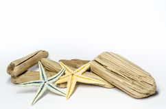 starfishes Stockfotos