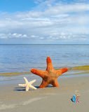 Starfishes on the beach. Royalty Free Stock Photography