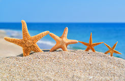Starfishes on the beach Stock Image