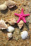 Starfishes on the beach Royalty Free Stock Photography