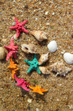 Starfishes on the beach Stock Photo