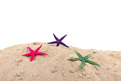 Starfishes at the beach Stock Images