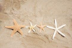 Starfishes on a beach. Four Starfishes on a sandy beach Royalty Free Stock Photos