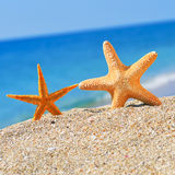 Starfishes on the beach Stock Photos