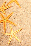 Starfishes on the beach sand Stock Photos