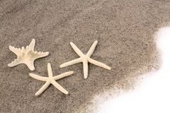 Starfishes on beach sand Stock Image
