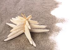 Starfishes on beach sand Stock Images