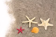Starfishes on beach sand Royalty Free Stock Photo