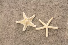 Starfishes on beach sand Royalty Free Stock Photography