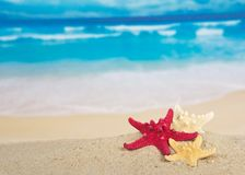 Starfishes on the beautiful sea coast Royalty Free Stock Photos