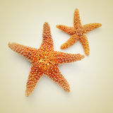 Starfishes on a beige background, with a retro effect. Some starfishes on a beige background, with a retro effect stock photography