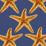 Starfishes on blue background Stock Photo
