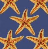 Starfishes on blue background Stock Photo