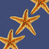 Starfishes on blue background Stock Images