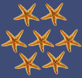 Starfishes on blue background Royalty Free Stock Image