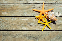 Starfishes and conch on a wooden pier. High-angle shot of some starfishes and a conch on a weathered wooden pier, with a blank space Royalty Free Stock Photography
