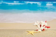 Starfishes and coral Stock Photo