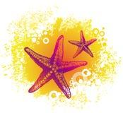 Starfishes do desenho Fotografia de Stock