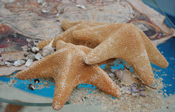 Starfishes em um mapa do vidro e do tesouro Imagens de Stock Royalty Free