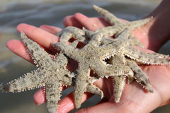 Starfishes in her hand Royalty Free Stock Image